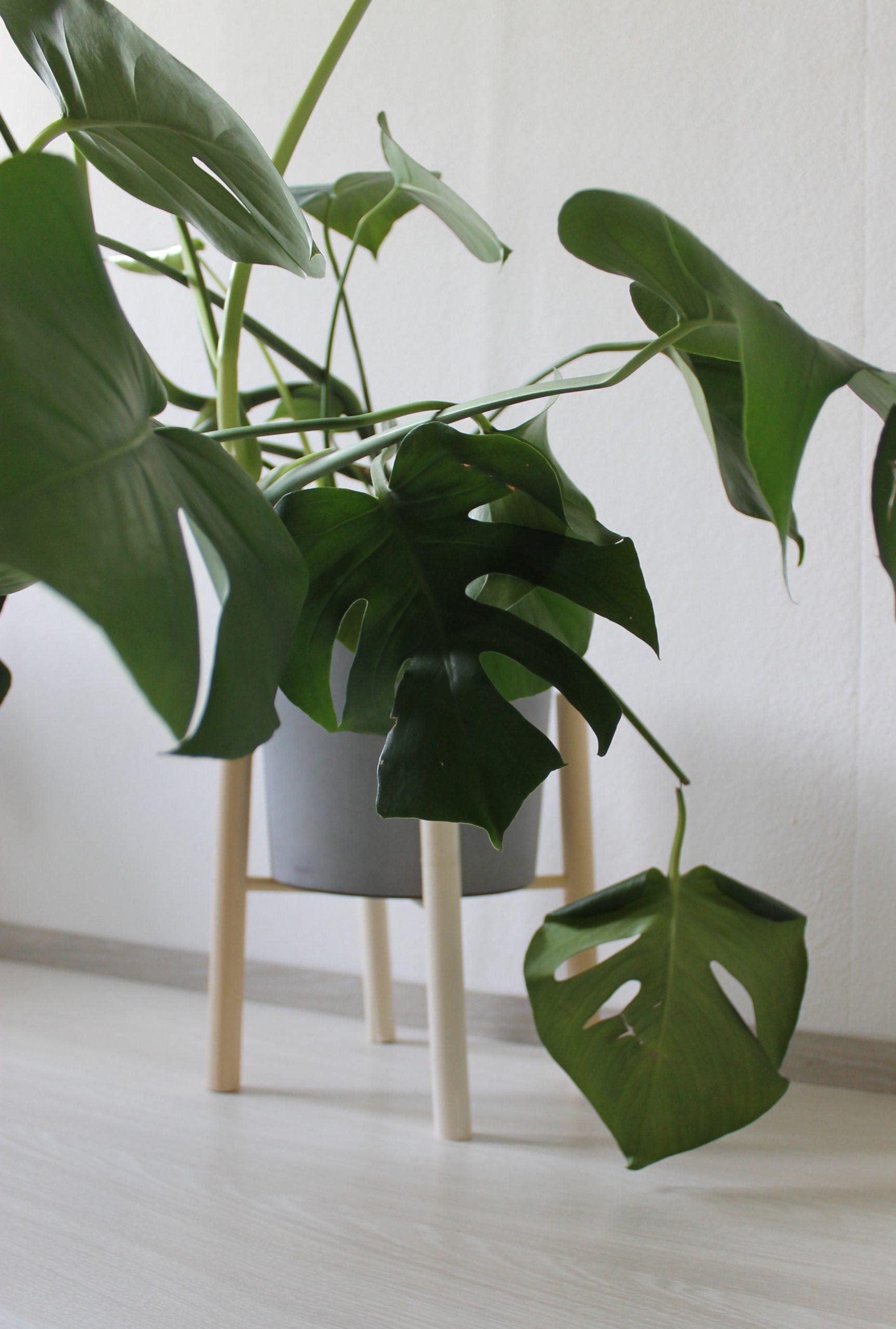 plantsssss